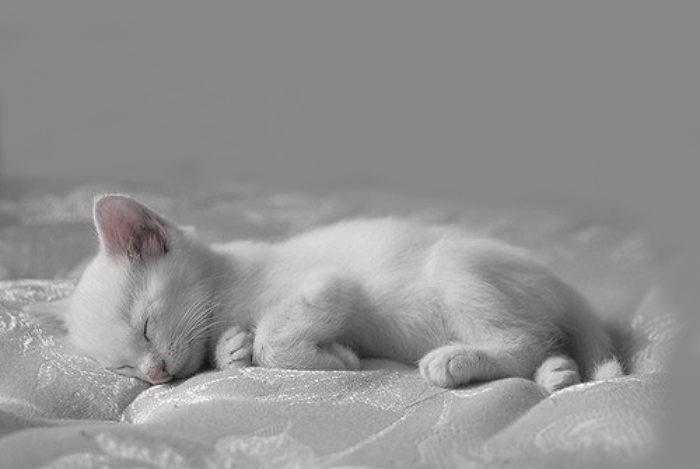 Спящий белый котёнок