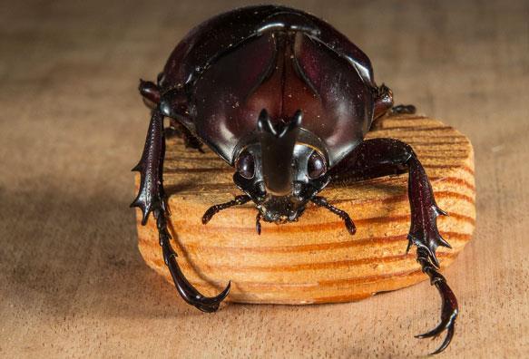 К чему снятся жуки на потолке фото