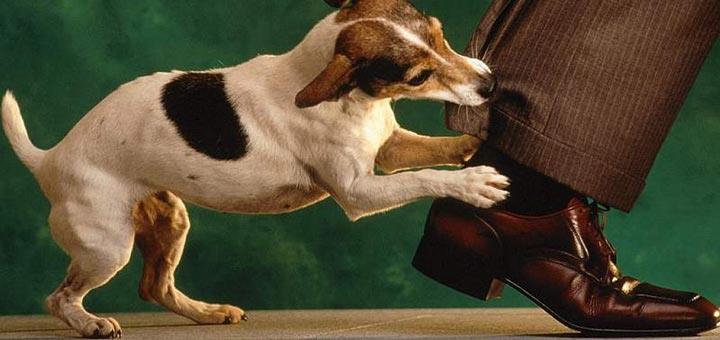 Фото Сонник нападение собаки