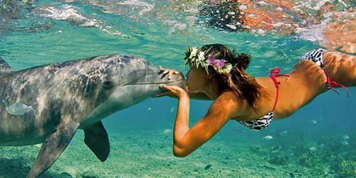 К чему снится целовать дельфина фото