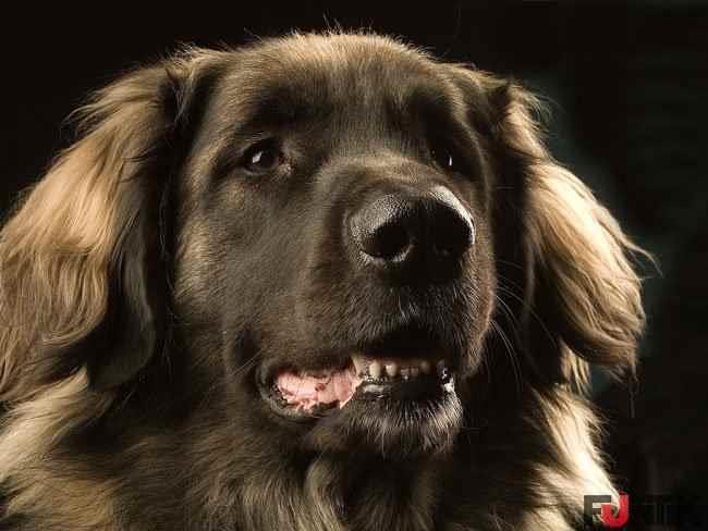 К чему снится собака с хозяином фото