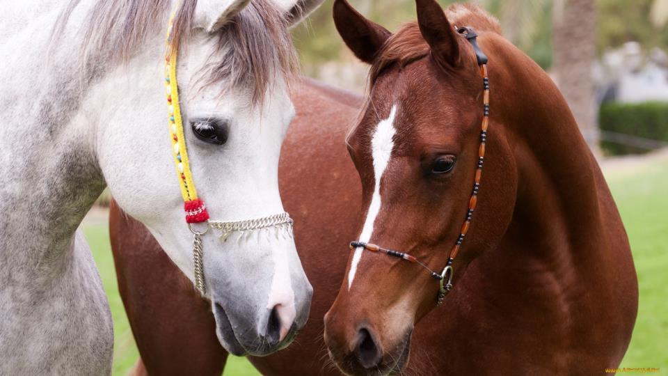 К чему снится раненая лошадь женщине фото