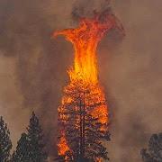 К чему снится пожар в лесу?