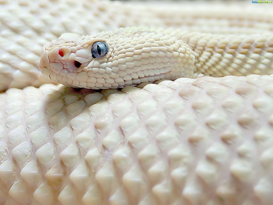 К чему снятся цветные змеи женщине