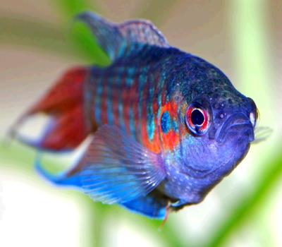 К чему снится рыба ходит фото