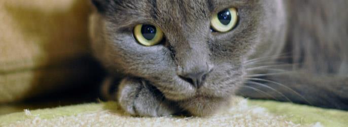 К чему снятся кошки разных цветов фото