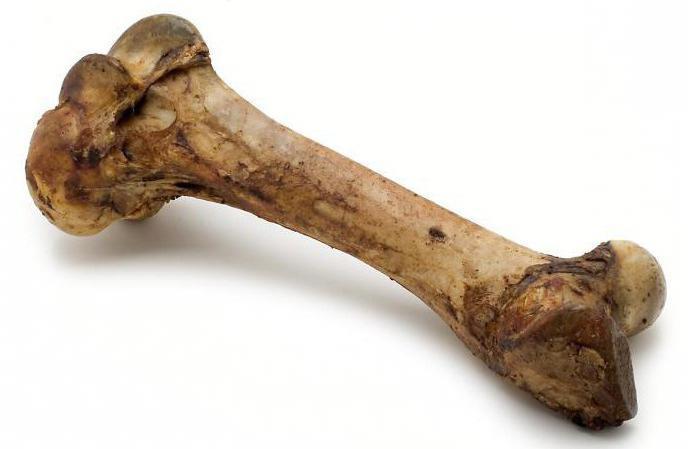 К чему снится кость