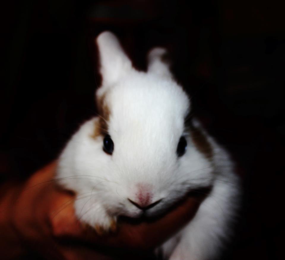 К чему снятся мертвые кролики женщине фото