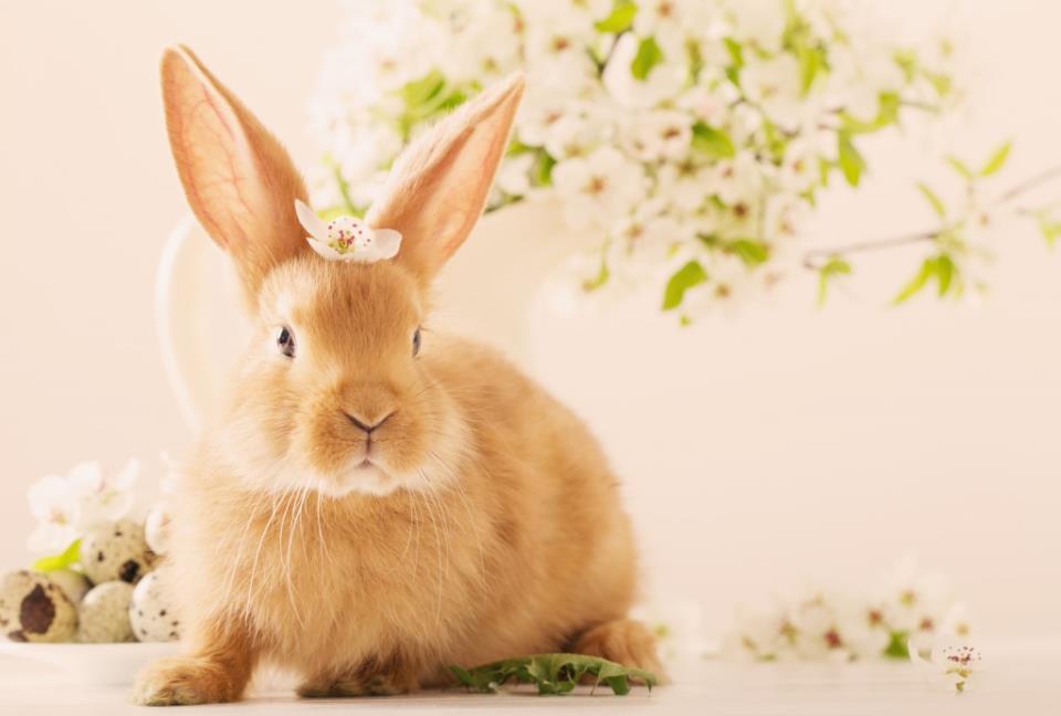 Фото К чему снятся мертвые кролики женщине