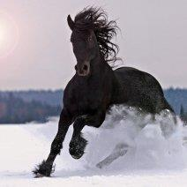 Выясняем, к чему снится черная лошадь!