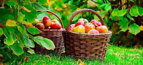 фрукты в саду