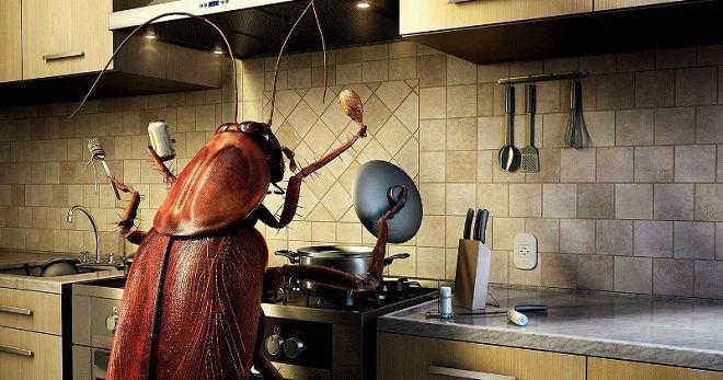 Сонник - тараканы, к чему снятся тараканы?