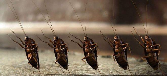 видеть во сне тараканов