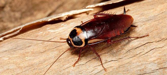 к чему снятся тараканы живые
