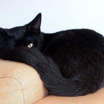 Видеть во сне черного кота - это к чему?