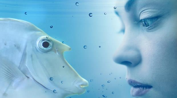 К чему снится рыба в бассейне женщине