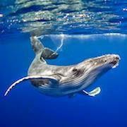 К чему снится кит?