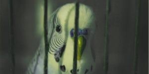 К чему снится попугай?