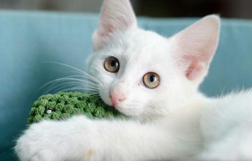 белый котенок во сне