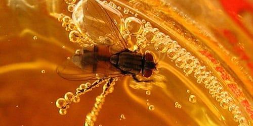 муха попала в мед