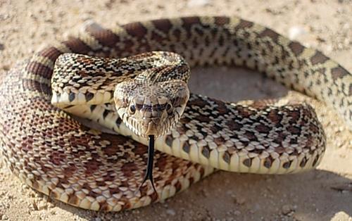 К чему снятся падающие змеи фото