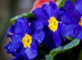 сонник синий цвет во сне