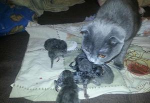 Родила котят