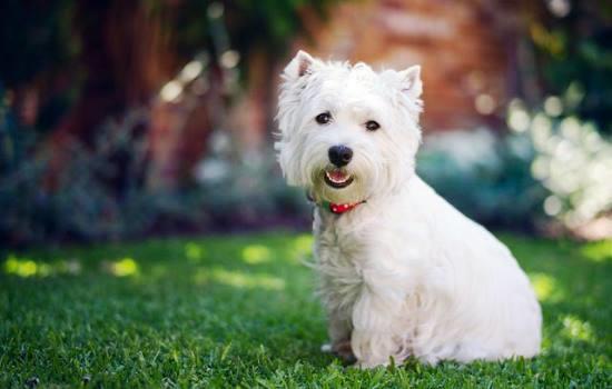 К чему снятся две белые собаки фото