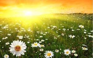 Утренние лучи солнца