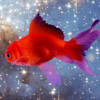К чему снится черная рыба женщине