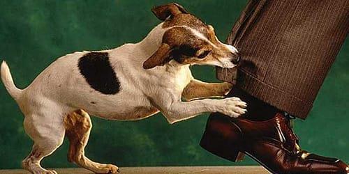 Картинки по запросу Сонник собака к чему снится когда кусает или черная
