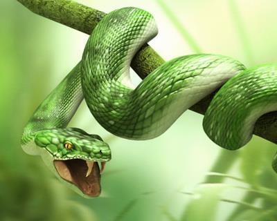 К чему снятся ползущие змеи сонник фото