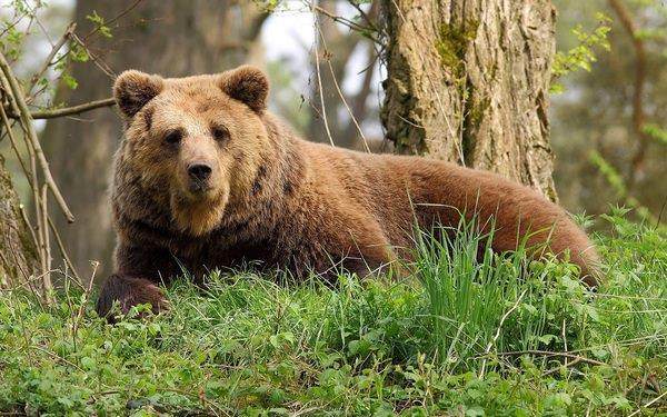 Фото К чему снится добрый медведь женщине