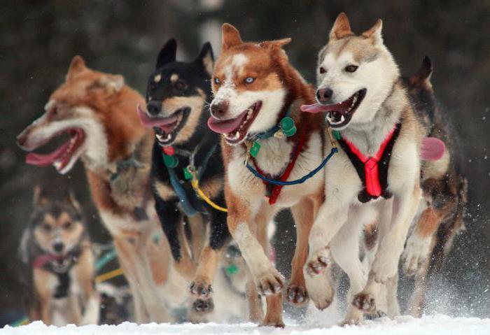 Фото Сонник много собак добрых