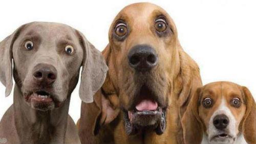 Сонник много собак добрых фото
