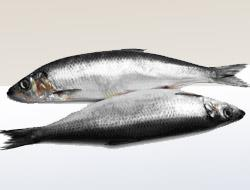 Увидеть рыбу во сне (фото)