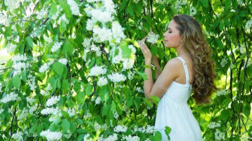 черемуха цветет во сне