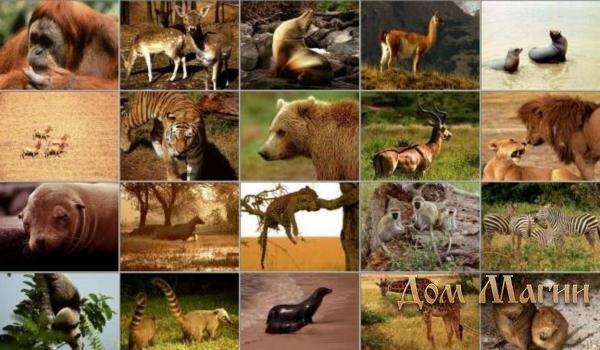 К чему снятся животные которые умерли фото