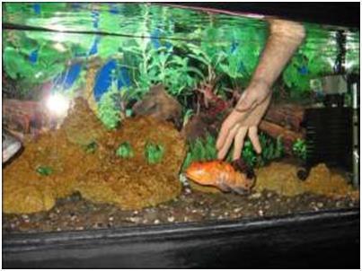 Ловить рыбу в аквариуме