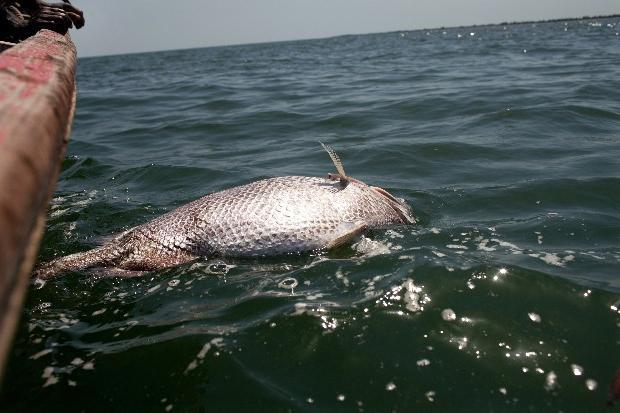 Дохлая рыба во сне беременной 85