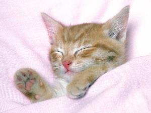 Пригрелась в постели
