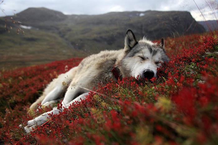К чему снится мёртвая собака, умирающая, раненая. Убить собаку во сне