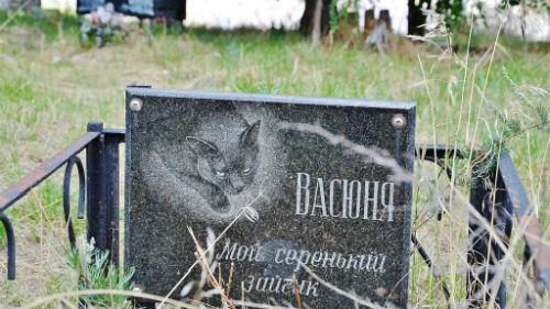 кладбище животных