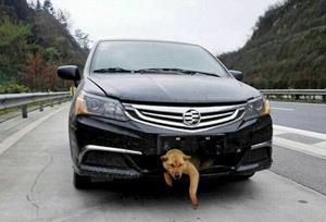 Собака попала под машину
