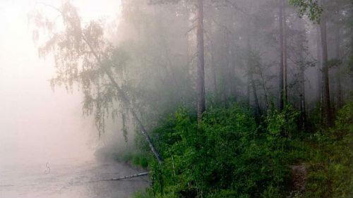приснился туман над водой