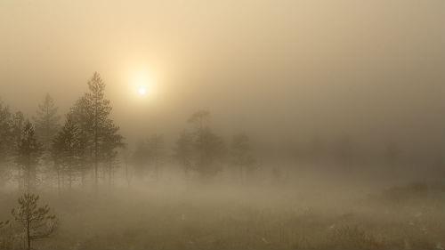 к чему снится густой туман