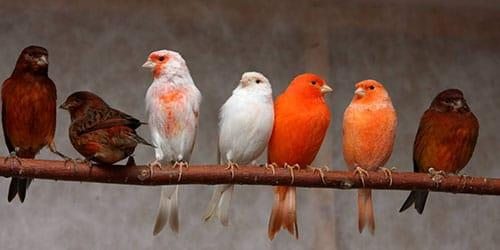 яркие птицы