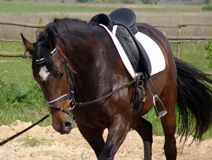 Сонник: к чему снится лошадь (конь)