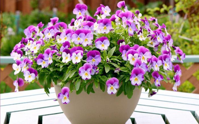 к чему снятся цветы в горшках