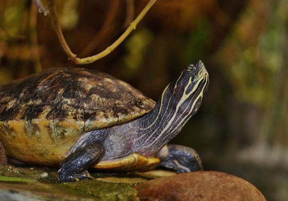В животном мире выделяют разнообразие видов.